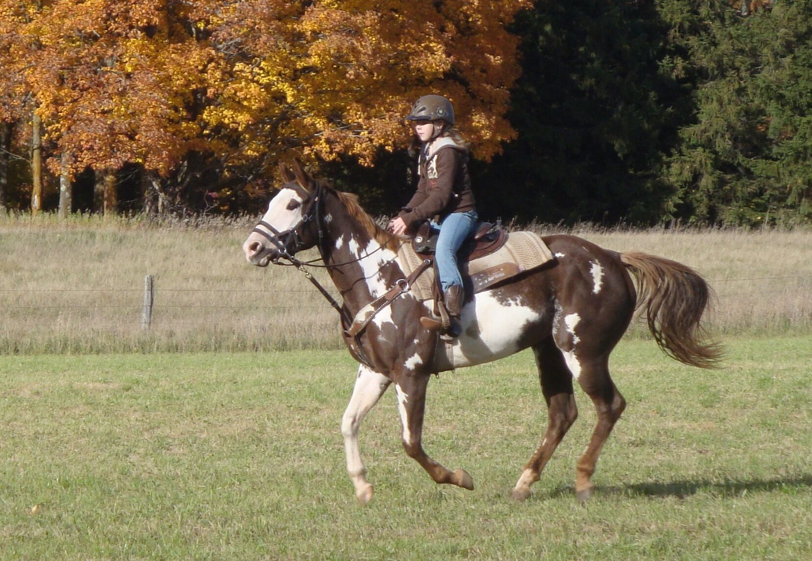 Reg. Flashy Overo Paint Trail Mare