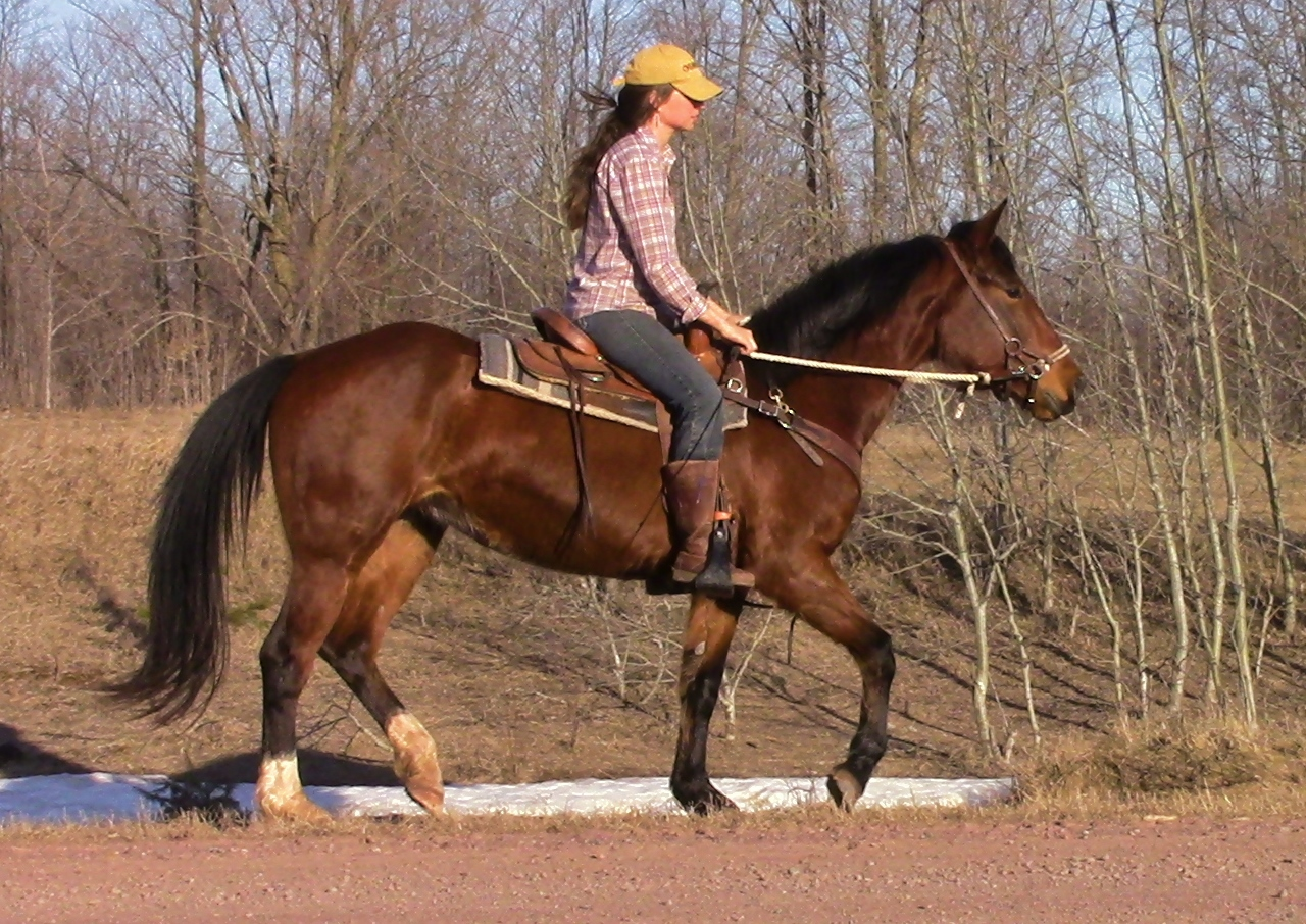 BLM Mustang Fun Saddle Trained