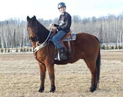 Flash -Morab Gelding